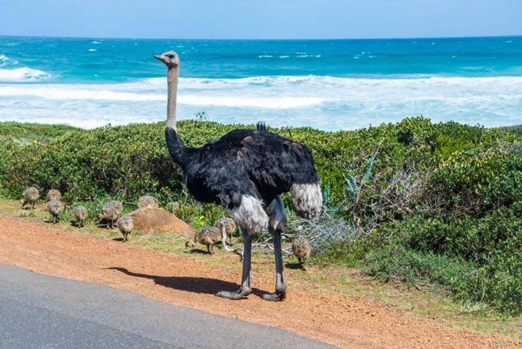 afrikai randevú Ausztráliában serendipity randevú