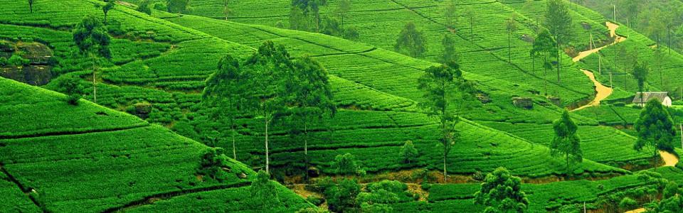 Srí Lanka nagykörút szafarival