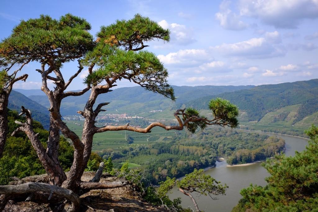 Túránk a világörökség részét képező Wachau-i völgyszoros, Duna fölé magasodó csodálatos hegyvidék ösvényeit barangolja be. Várrom, pazar kilátás, gyönyörű sziklavilág, mesés kisváros izgalmas, szép kirándulás családoknak, baráti társaságoknak egyaránt.