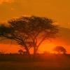 Körutazások Dél-Afrikai Köztársaságban