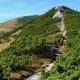 Windberg, út a hegyre