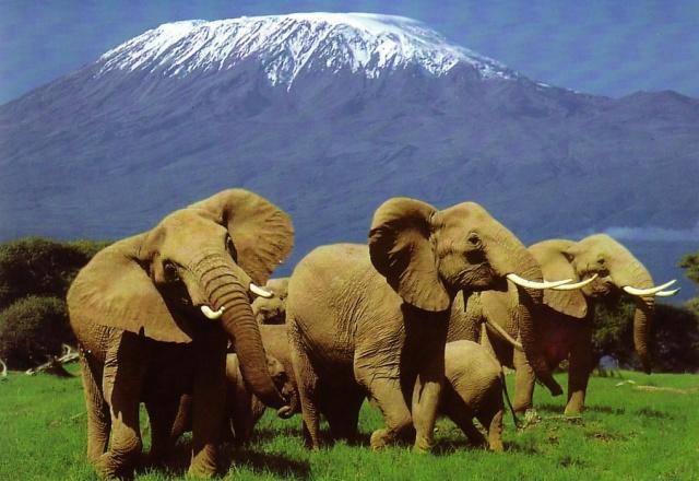Kenya szafarik és Mombasa tengerpart