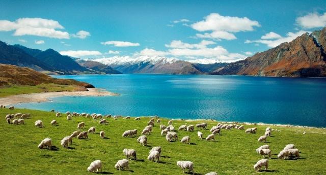 Új-Zéland kékje