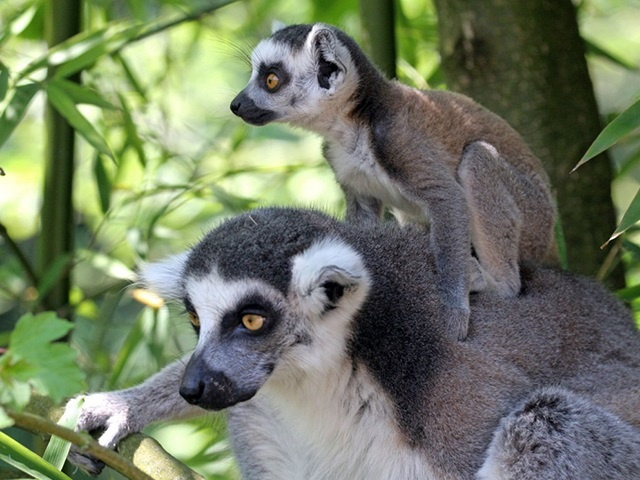 Madagaszkár Óriáskörút