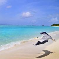 Hotel Palm Beach Resort & Spa **** Garden & Beach villák