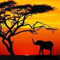 12 napos körutazás Dél-Afrikában