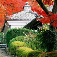 Momiji - Japán nagy körutazás (Oszaka, Kiotó, Hirosima, Tokió)