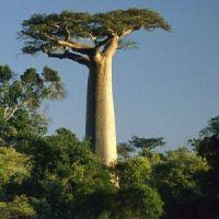 Körutazás Benyovszky Móricz királyságában, Madagaszkáron (Antananarivo, Antsirabe, Ambositra, Ranomafana, Ilakaka)