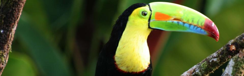 Costa Rica  - A természet szerelmeseinek (San Jose)