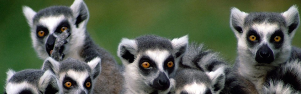 Madagaszkár - Kalandtúra a természet szerelmeseinek (Antananarivo)