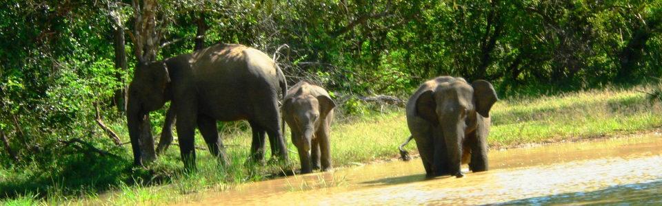 Sri Lanka - Maldiv-szigetek Körút 15 nap