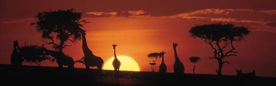 13 napos körút kenya safarival