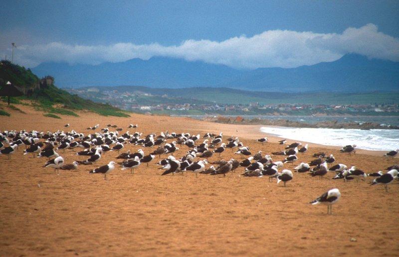 internetes társkereső oldal Dél-Afrikában